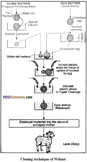 RBSE Solutions for Class 12 Biology Chapter 37 Mutations img 5