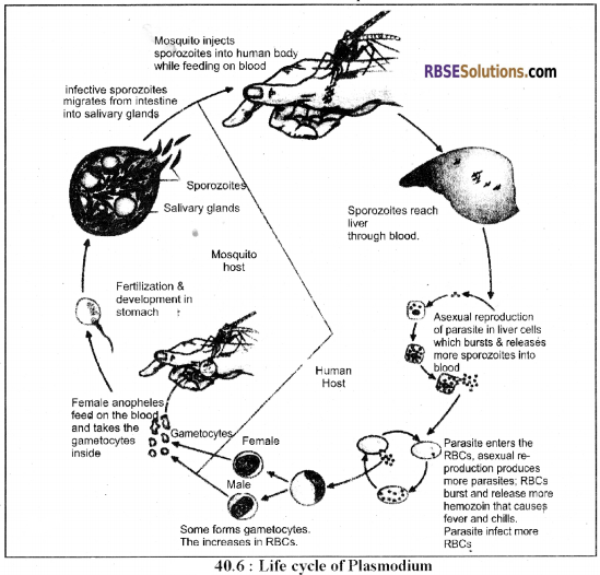 RBSE Solutions for Class 12 Biology Chapter 40 Important and Common Human Diseases img 2