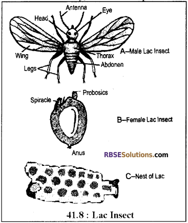 RBSE Solutions for Class 12 Biology Chapter 41 Domestication, Culture & Economic Importance of Animals img 2