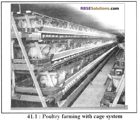 RBSE Solutions for Class 12 Biology Chapter 41 Domestication, Culture & Economic Importance of Animals img 4
