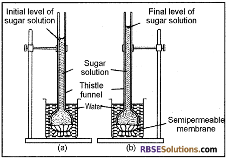 RBSE Solutions for Class 12 Biology Chapter 5 Plant Water Relations 4