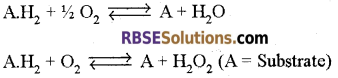 RBSE Solutions for Class 12 Biology Chapter 9 Enzymes 6