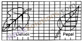 RBSE Solutions for Class 6 Maths Chapter 14 Perimeter and Area In Text Exercise image 12