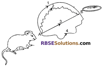 RBSE Solutions for Class 6 Maths Chapter 8 Basic Geometrical Concepts and Shapes In Text Exercise image 1