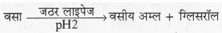 RBSE Solutions for Class 10 Science Chapter 2 मानव तंत्र image - 20