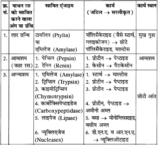 RBSE Solutions for Class 10 Science Chapter 2 मानव तंत्र image - 23