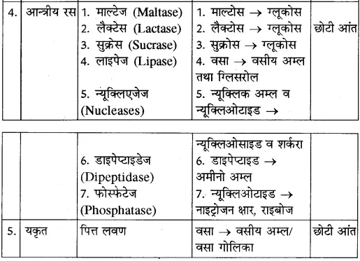 RBSE Solutions for Class 10 Science Chapter 2 मानव तंत्र image - 24
