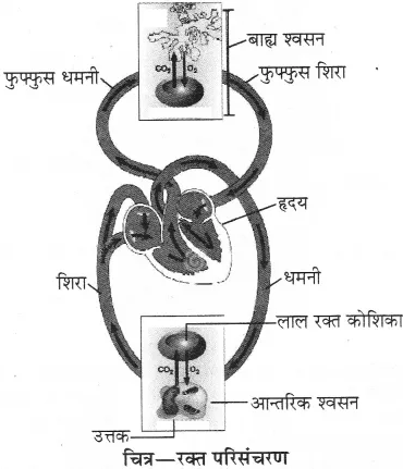 RBSE Solutions for Class 10 Science Chapter 2 मानव तंत्र image - 26