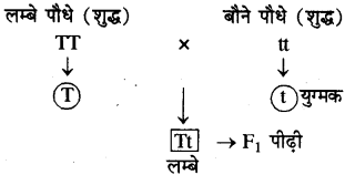 RBSE Solutions for Class 10 Science Chapter 3 आनुवंशिकी image - 13