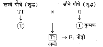 RBSE Solutions for Class 10 Science Chapter 3 आनुवंशिकी image - 2