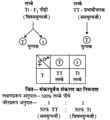 RBSE Solutions for Class 10 Science Chapter 3 आनुवंशिकी image - 8
