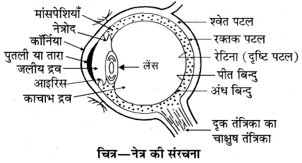 RBSE Solutions for Class 10 Science Chapter 9 प्रकाश image - 71