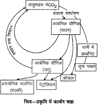 RBSE Solutions for Class 9 Science Chapter 13 पर्यावरण 10