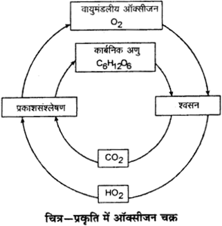 RBSE Solutions for Class 9 Science Chapter 13 पर्यावरण 3