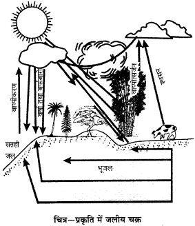 RBSE Solutions for Class 9 Science Chapter 13 पर्यावरण 9