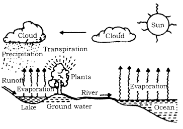 RBSE Solutions for Class 9 Science Chapter 13 Environment 3