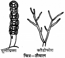 RBSE Solutions for Class 9 Science Chapter 7 जैव विविधता 8
