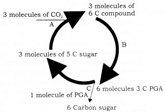 RBSE Solutions for Class 9 Science Chapter 8 Major Activities of Living Organisms 8